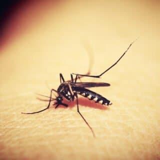 Disinfestazione di zanzare a Roma