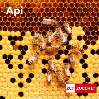 disinfestazione api