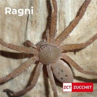 disinfestazione ragni aracnidi