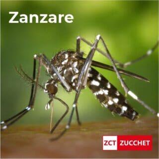 disinfestazione zanzare e pappataci